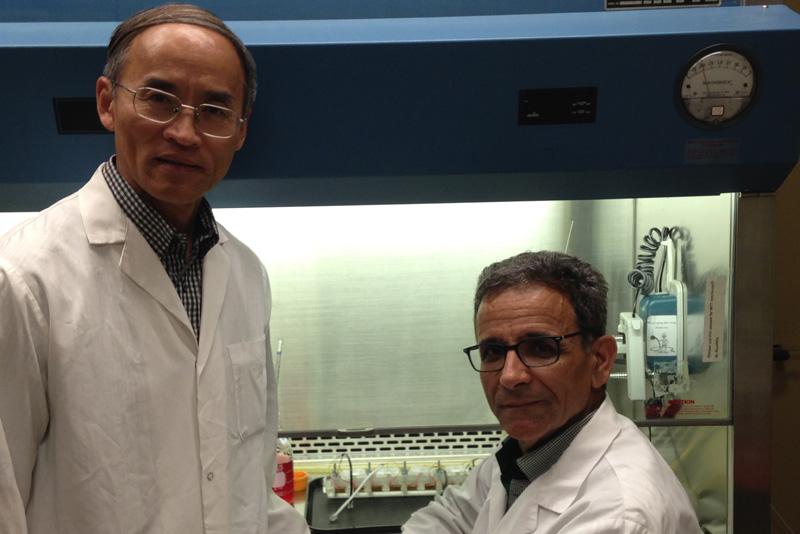 Les chercheurs Ze Zhang et Mahmoud Rouabhia